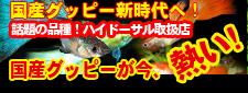 guppy_20120109200120.jpg
