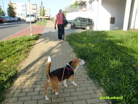 CIMG8239_20110918051143.jpg