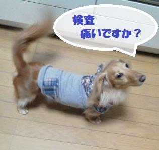 NEC_0208.jpg