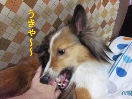 うきゃ~~