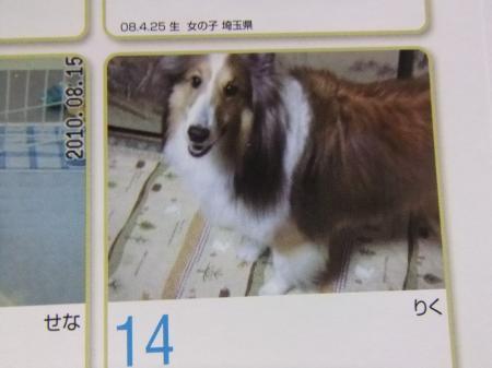 365カレンダー★りく