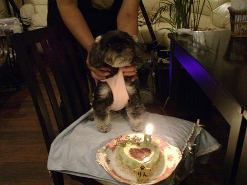リんちゃん6歳のお誕生日