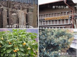 1109satoyamazarug11.jpg