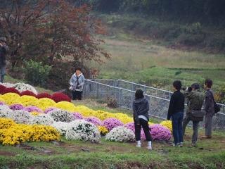 1109satoyamazarug17.jpg