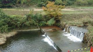1109satoyamazarug19.jpg