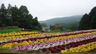 1109satoyamazarug3.jpg