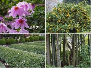 1109satoyamazarug6.jpg
