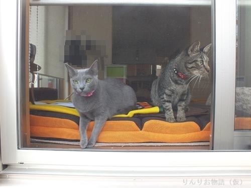窓辺のニャンズ