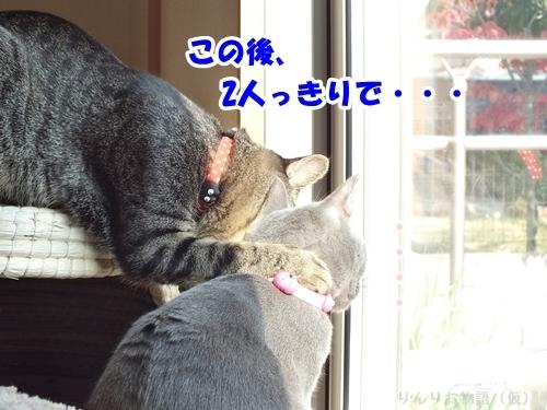 強引に誘うネコ