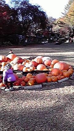 下かぼちゃ