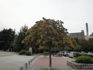DSC00914 (370x278)