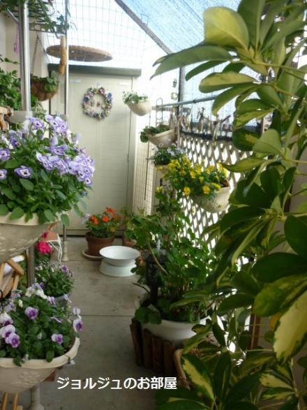 私のお庭9