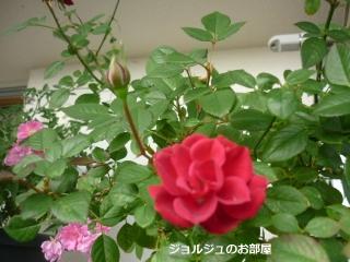 5私のお庭