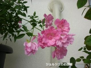 6私のお庭