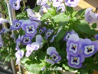 私のお庭2