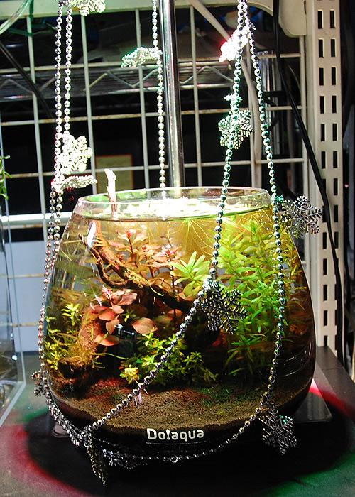 クリスマス飾り水槽