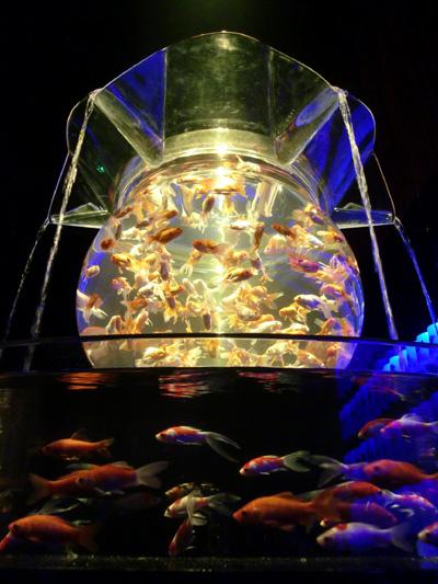 829fish10.jpg
