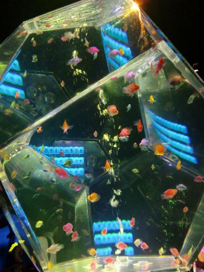 829fish11.jpg
