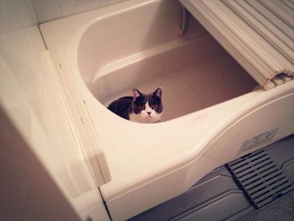 お風呂ラブです
