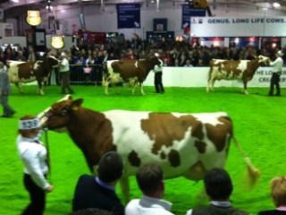 cowcontest.jpg