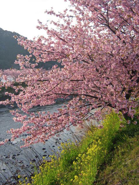blog_import_4ebdd8d102b91.jpg