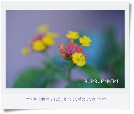 DSC_5159PP
