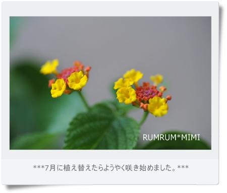 DSC_PPP5161.jpg