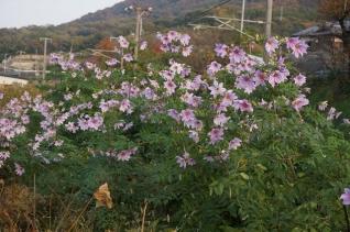 津嶋神社4