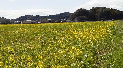 シオーネ 2012.3 (2)