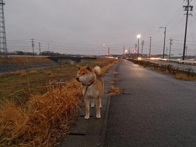 2014.1.30 散歩