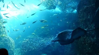 2014.2.16 新江の島水族館-6