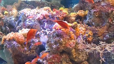 2014.2.16 新江の島水族館-5