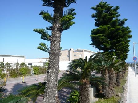 チサンリゾート沖縄美ら海:外観