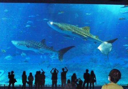 美ら海水族館:大水槽2