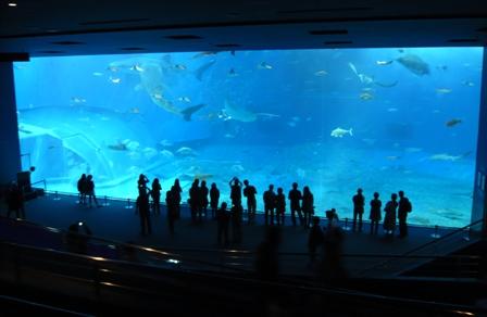 美ら海水族館:大水槽1