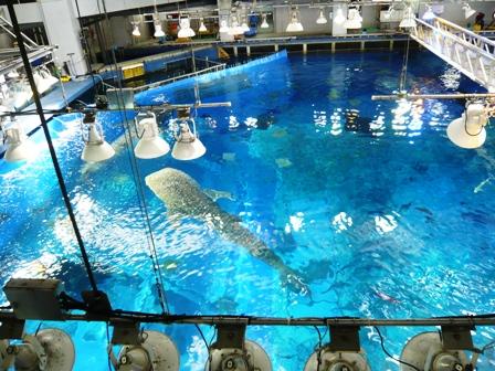 美ら海水族館:大水槽上部