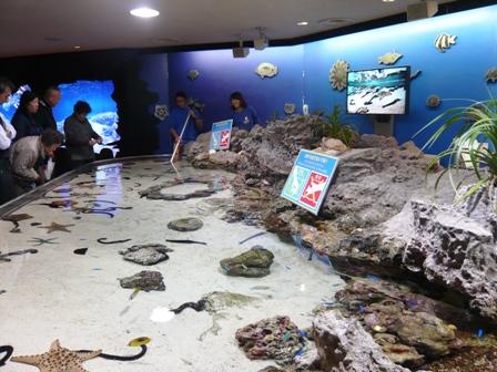 美ら海水族館:ふれあい水槽
