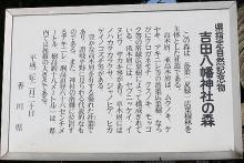 吉田八幡神社4