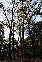 吉田八幡神社8