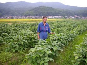 田中農場 丹波黒豆