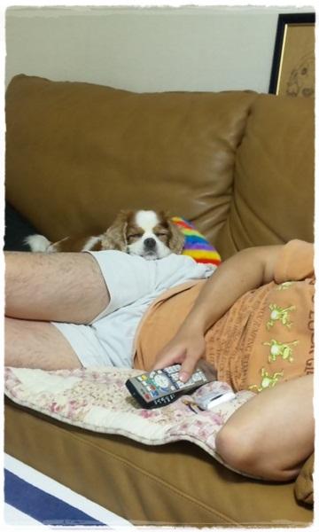 とうちゃんのお尻で寝る犬
