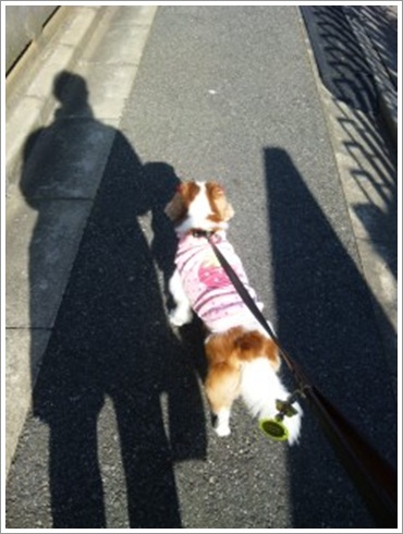 母ちゃんとお散歩