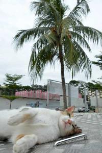 120115-1201-Singapore-a5.jpg