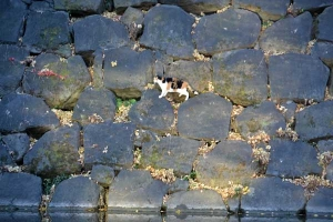 Edo Stone Wall and Cat
