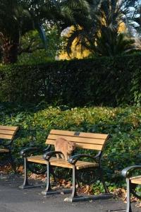 Bench Cat