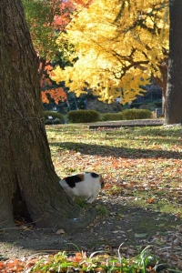 Tokyo Park Cat and Autumn Trees