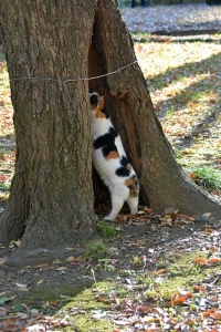 Cat Inspecting an Old Tree