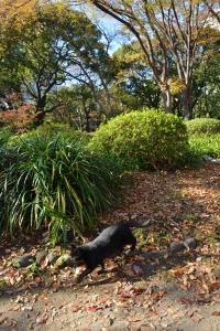 Black Cat in Autumn