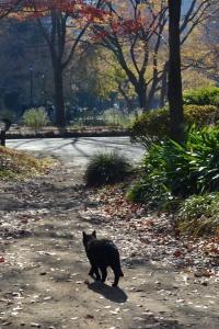 Black Cat Running Away