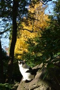Tokyo Park Cat in Autumn